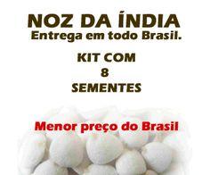 Noz da Índia - Kit com 8 sementes | Entrega em todo Brasil | Receba em sua casa | Garantia de Satisfação!
