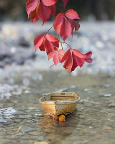Autumn splendor: red leaves and a boat Bright Wallpaper, Cute Wallpaper Backgrounds, Pretty Wallpapers, Flower Backgrounds, Love Wallpaper, Miniature Photography, Cute Photography, Photoshop Wallpaper, Cool Pictures For Wallpaper