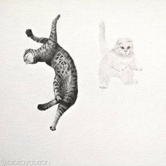 This is a graphite drawing. Now the names of these fluffy jumping cats are Jumping Cat, Graphite Drawings, Jay, Waffles, Moose Art, Sketch, Names, It Is Finished, Tattoo