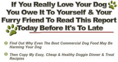 Your dog deserves the best you can give it when it comes to diet. Having a vast range of homemade dog foods recipes to hand for the best wet...