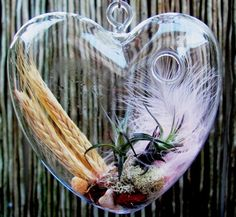 Heart Glass with airplant