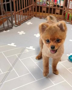 cute pepe is our sweet little puppy boy post blog - 236×295