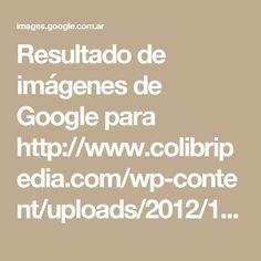 Resultado de imágenes de Google para http://www.colibripedia.com/wp-content/uploads/2012/11/86b33f3f33f191e2e99d07d84cd789f7_large.jpeg