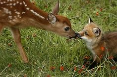 Adorable.  When does this actually happen in nature and how do photographers just happen to catch it?