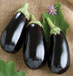 Nadia Eggplant is the traditional black Italian type. Uniform, long by diameter, dark purple fruits are glossy and blemish free. Tall, sturdy plants can set fruit under cool conditions. Ready to harvest in 65 days. Garden Seeds, Planting Seeds, Eggplant Seeds, Eggplant Plant, Sheep And Wool Festival, Purple Fruit, Seed Packaging, Different Vegetables, Organic Seeds