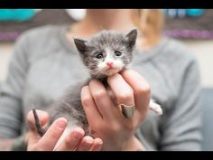 Rescuing an Emaciated Kitten, Small Fry, and her family - YouTube If you ever care for orphan kittens, or would like to do that, this lady's web site has a LOT of info. Links to her site & her social media accounts are in the text under the video. (You may have to hit the down arrow to see the full text.)
