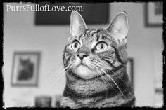 black and white pet photography  #cats