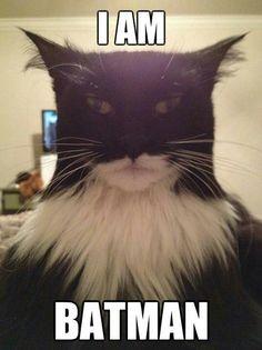 """""""I AM BATMAN"""" cat for the win."""