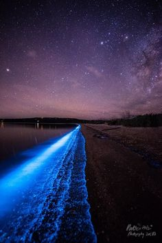 Phytoplankton in the River Derwent is part of Tasmania travel - In Tasmania, parts of the River Derwent shoreline lit up with phytoplankton nick named sea sparkles Image Matt Holz Bioluminescent Plankton, Places To Travel, Places To See, Travel Destinations, Tasmania Travel, Sea Of Stars, Ciel Nocturne, Maurice, Natural Phenomena