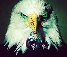 Eagles vs Giants