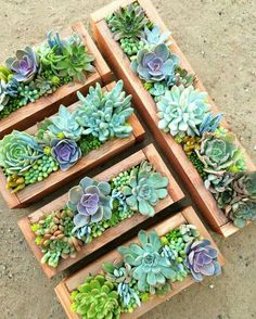 Succulent garden for the kitchen bay window