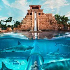 Leap of Faith WaterSlide, Atlantis, Bahamas.  - Leap of Faith at Atlantis Paradise Island in the Bahamas drops riders 60 feet from the top of a beautifully constructed Mayan Temple at hair-raising speeds into a shark-filled lagoon.  #tabula #App #adventure #travel #bucketlist