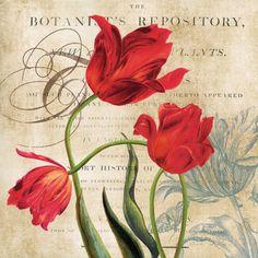 Botanist's Repository Carol Robinson