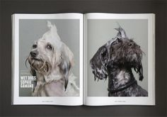 Four&Sons—a design and culture publication with man's best friend its defining theme—has just announced a biannual print journal