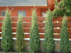 Ezeket is ültesd tuja helyett Yard Landscaping, Garden Design, Outdoor Structures, Landscape, Plants, Gardening, Balcony, Autumn, Google