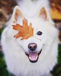 Lindo e pateta  . . . . #doglovers #dogofinstagram #instadog #dogs #mydogs #doglover #dogsarefamily #dogsarelove #igersportugal #iloveanimals #photography #animalsofinstagram #animalshots #bomregisto #odonocuida