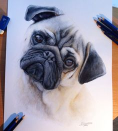 Color Pencil Drawing - Dog drawings / Dog Art : Every artist chooses their favourite pets as one of their subjects while creating artworks. We have seen the dog paintings, now go through our collection of dog colour pencil Realistic Animal Drawings, Cool Pencil Drawings, Pencil Drawing Tutorials, 3d Drawings, Hipster Drawings, Pencil Sketching, Horse Drawings, Painting Tutorials, Pug Art