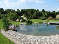 Tips for Building Ponds in Your Backyard - Great Affordable Backyard ideas Swimming Pool Pond, Natural Swimming Ponds, Natural Pond, Swimming Pool Designs, Small Backyard Pools, Ponds Backyard, Pond Maintenance, Pond Water Features, Pond Landscaping