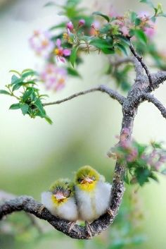 .birds in the blossoms