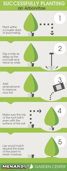 Successfully Planting an Arborvitae. Read full article: http://www.menards.com/main/c-14181.htm?utm_source=pinterest&utm_medium=social&utm_content=arborvitae&utm_campaign=gardencenter