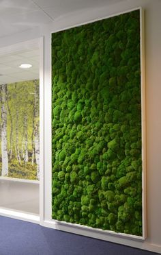 Indoor moss wall in an office space