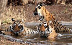 Explore the Famous #Wildlife #Sanctuaries near Hyderabad