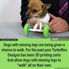"""Dogs with missing legs are being given a chance to walk. For the past year TurboRoo Designs has been printing carts that allow dogs with missing legs to """"walk"""" all on their own. Miss Legs, Chihuahua, 3d Printing, Pup, The Past, Facts, Prints, Dogs, Image"""