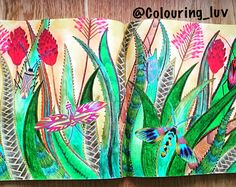 Tropical Wonderland by Millie Marotta For more, go to my instagram page @Colouring_luv