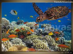 Żółw pod wodą