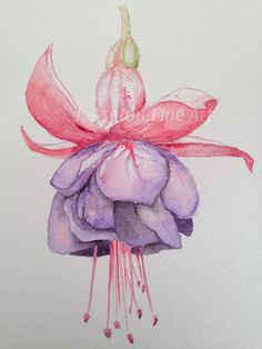 An original watercolour painting of a beautiful coral pink and purple fuchsia flower. Fuchsia flowers are stunning in their delicacy and unique petal