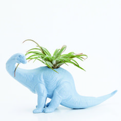 Featured in April 2014 edition of absolute Herefordshire. http://www.absoluteherefordshire.co.uk/online-editions.html - #Dinosaur #Planter - With air plantr room decor, toy planter, light blue, tillandsia pot.