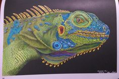Iguana By Ken Grabe Pencil DrawingsColoring BooksLizardsWILDLIFEColoring