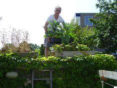 Michels blog - Courgettes kunnen weer het dak op. De bakken met courgettes gaan vandaag weer het dak op. Bekijk meer tips op www.tuinen.nl