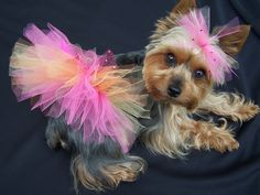 Darling dog Tutu  $13.00