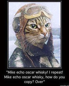 it's Ameowlia Catheart, bravest feline pilot around.