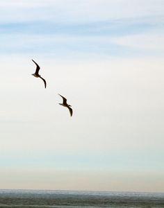 2 Gulls