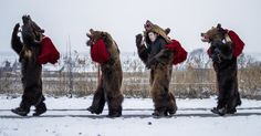 In a corner of Romania, the year-end holiday season is ushered in by troupes of bearskin-clad revelers dancing, singing and drinking. Romania Bucharest, Shadowrun, Terra, Ny Times, Wardrobes, Places To Visit, Corner, Europe, Culture