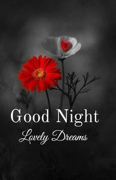 Good Night Love Quotes, Good Night I Love You, Good Night Flowers, Beautiful Good Night Images, Good Night Love Images, Good Night Gif, Good Night Sweet Dreams, Night Quotes, Good Night Greetings