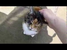 This is so funny! haha  Cat has a crazy deep meow - YouTube