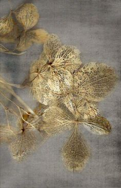 grey and gold Art Feuille D'or, Gold Leaf Art, Deco Nature, Textures Patterns, Color Inspiration, Rugs On Carpet, Carpets, Abstract Art, Sculpture
