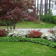 Luscious front-yard landscape