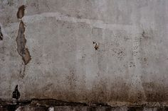 Texture Native Son, Distressed Walls, Spring Awakening, Textured Walls, Painting, Urban, Painting Art, Paintings, Painted Canvas