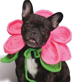 Blooming Dog Costume :: Roundup of free crochet pet costumes on Moogly! Halloween Crochet, Dog Halloween, Crochet Dog Sweater, Crochet Pet, Free Crochet, Crochet Ideas, Crochet Projects, Easy Crochet Patterns, Knitting Patterns