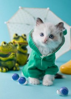clothing for cats, pets, green hoody, outfit