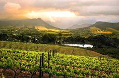 Beautiful vineyards in Franschoek, South Africa