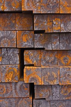 Wood patterns are an endless source of research. Cut wood-ends photographed by Michael Chase