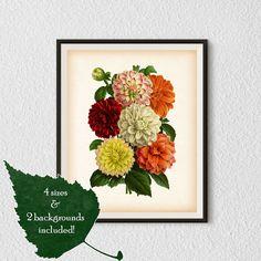 Dahlia wall art Vintage print Botanical от RestoredBotanicalArt