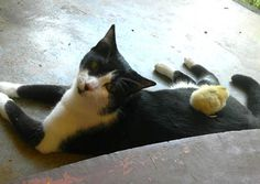 Cat Adopts Orphan Chick