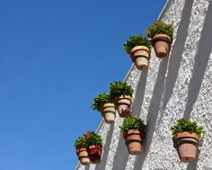potted wall plants on the Balcon de Europa on the streets of Nerja