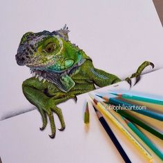 Repost from @biophilicart  Iguana (with attitude!) completed . Letting you in to personal life secrets now  my OH (whom l have to tell you has been the absolute best influence on my art work so don't take this the wrong way two creative people often have different opinions!) and l had a creative difference over this. He loved the iguana but said he should have been on a rock or ANYTHING other than a silly white surface! I like the contrast and the way he looks like he is coming through a…